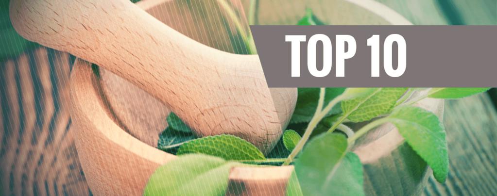 Top 10 Entheogens