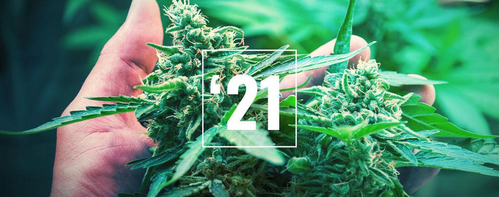 Le Migliori Varietà Di Cannabis Per Il 2019
