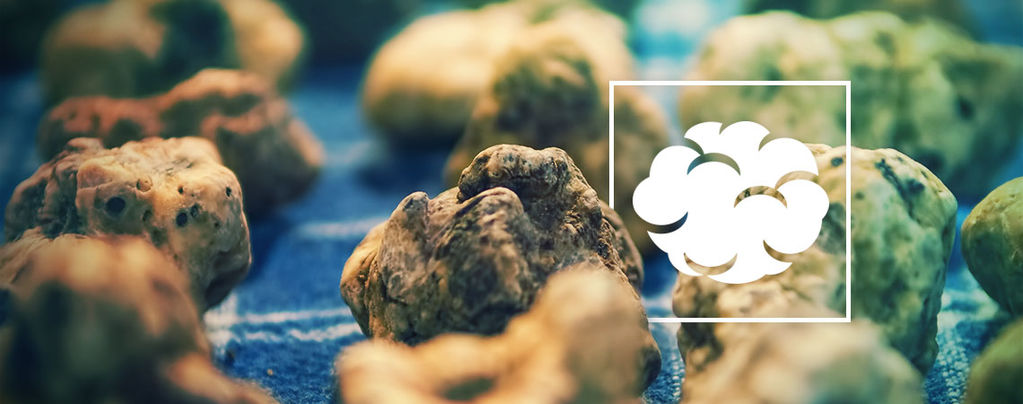 Psilocybe Galindoi: Flesh Of The Gods