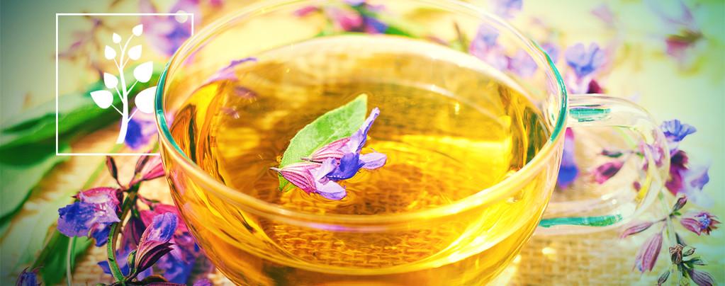 Tè di Salvia Divinorum