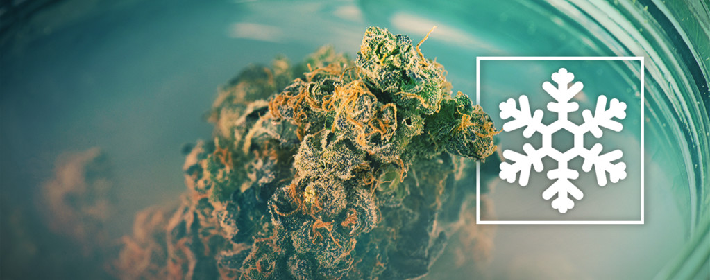 To Freeze Or Not To Freeze Your Weed?