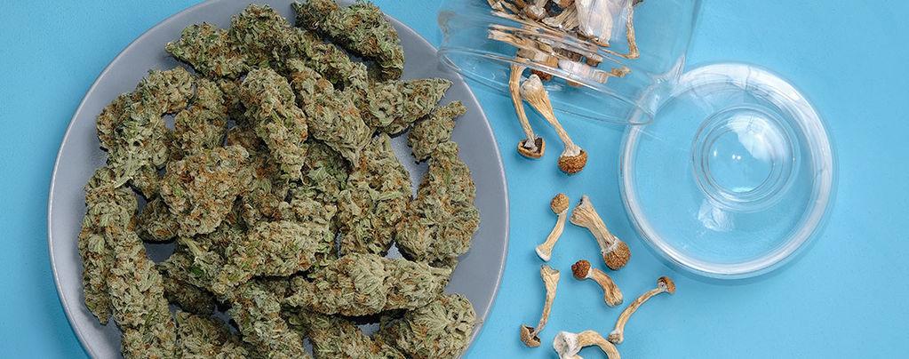 È Sicuro Mescolare Ganja E Funghi Allucinogeni?