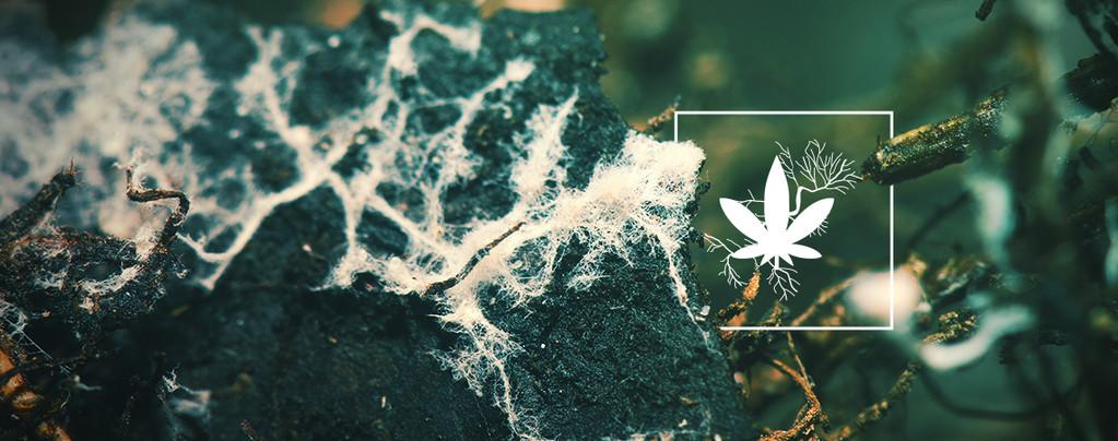 Easy Roots Mycorrhiza Mix