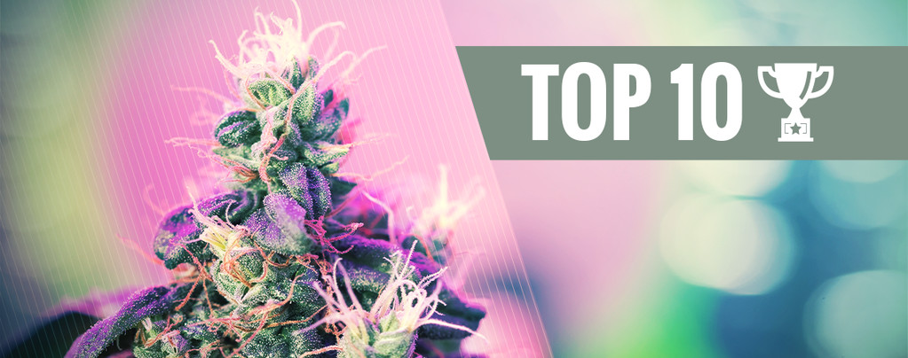 Top 10 Award Winning Cannabis Strains
