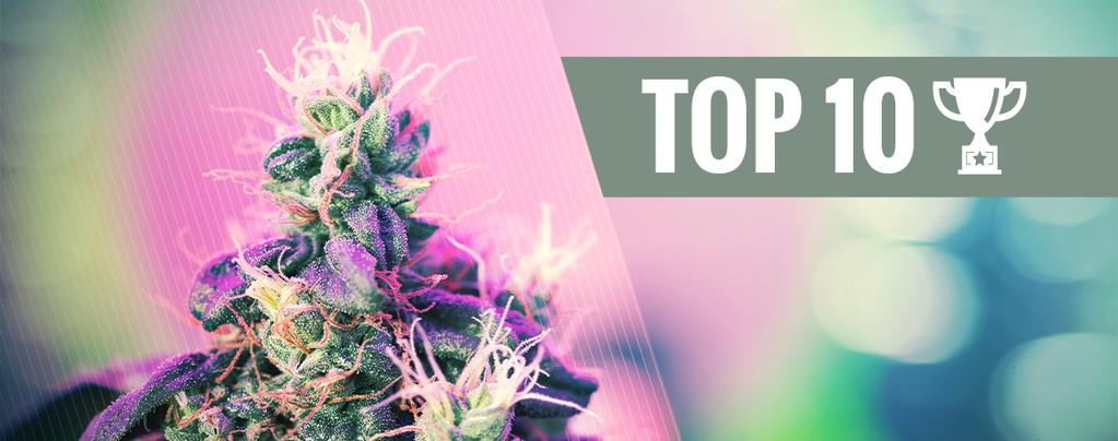 Top 10 Award Winning Cannabis Strains