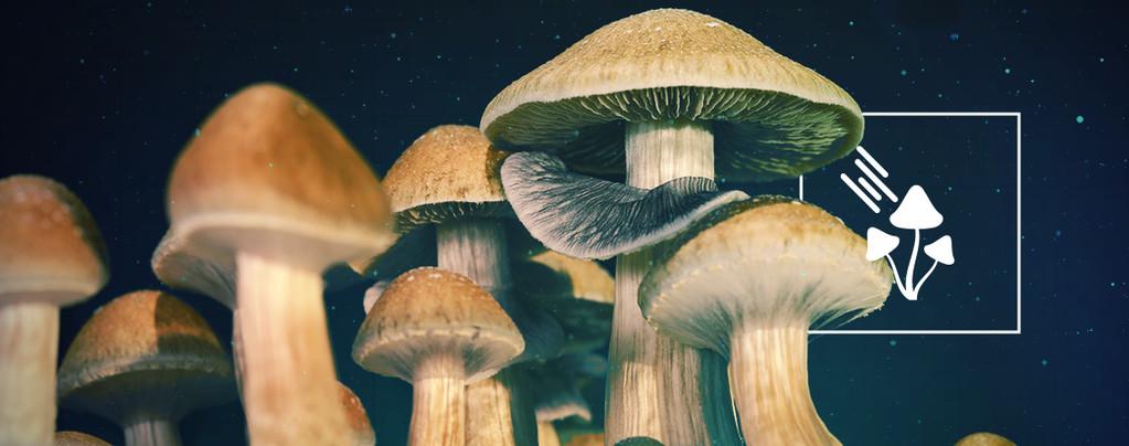 How Much Light Do Magic Mushrooms Need To Grow