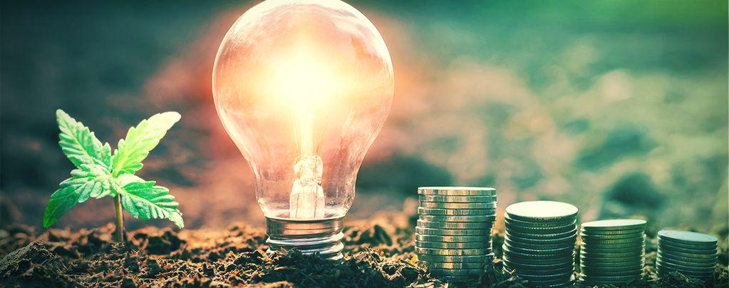 Investimenti in fumo: I costi energetici della coltivazione indoor della Cannabi