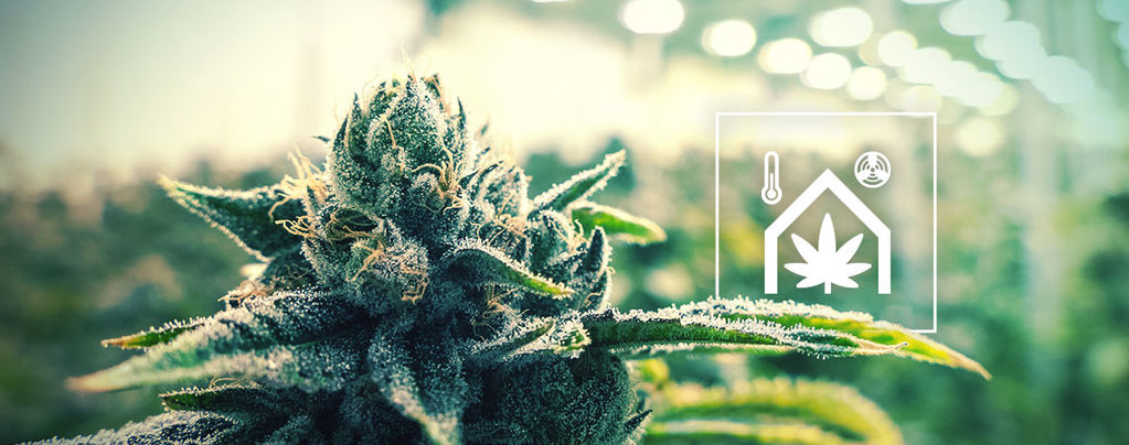 Making Your Cannabis Grow Room Easier To Manage