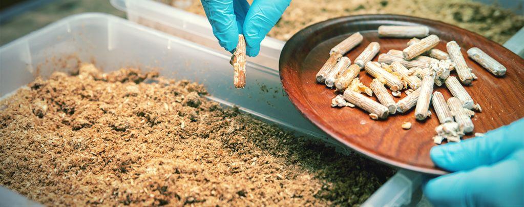 Sterile Technique For Growing Magic Mushrooms