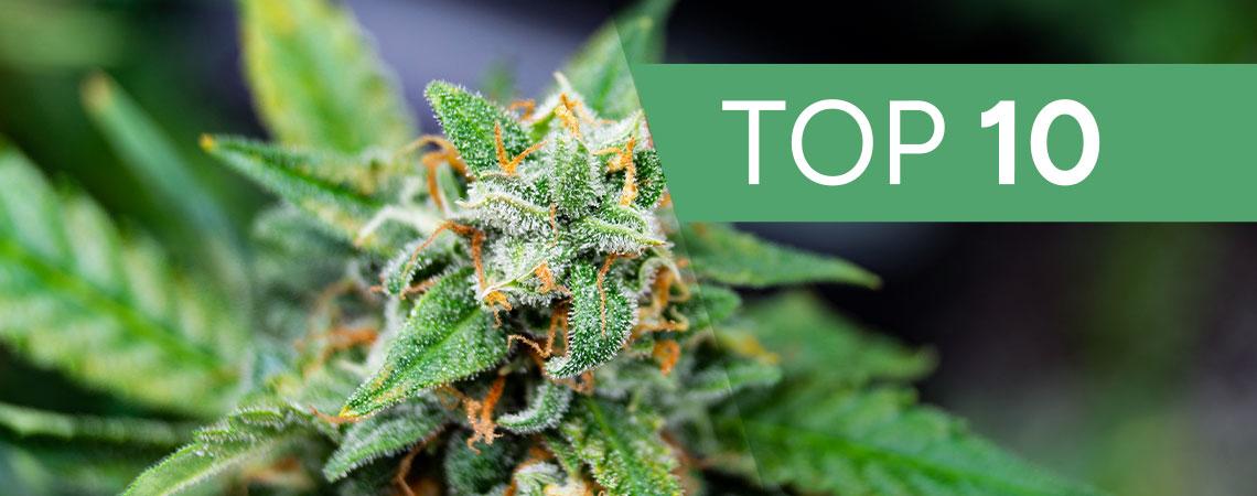Fastest Autoflowering Cannabis Strains