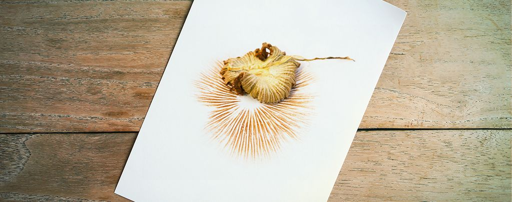 How To Take Clean Spore Prints
