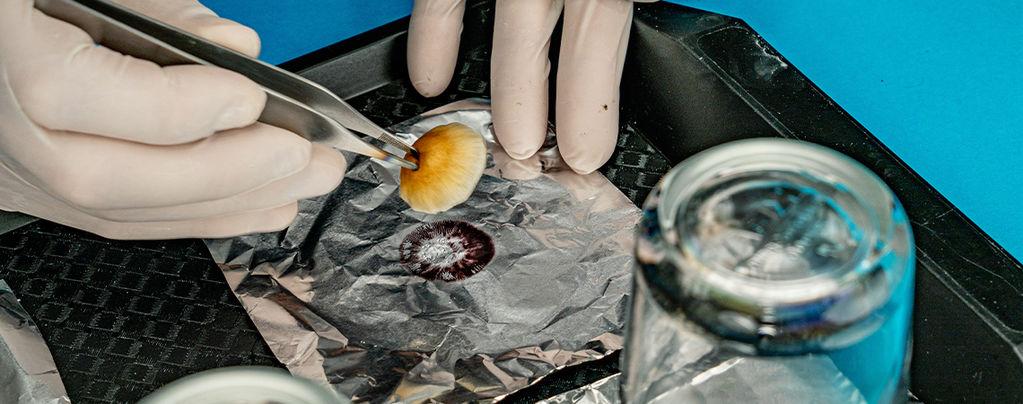 Spore Prints