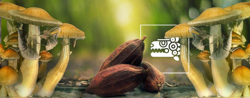The Aztec Combo: Mushrooms & Cacao