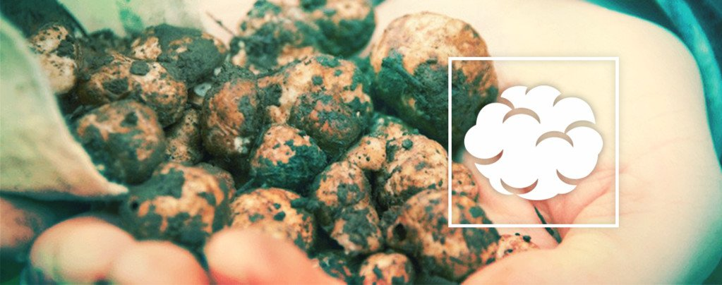 A Step By Step Guide To Cultivating Magic Truffles From Scratch