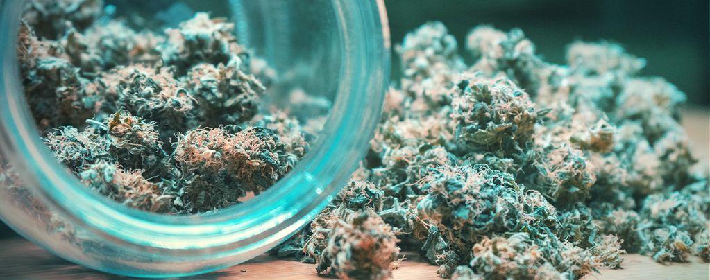 Cannabis Trocknen Und Ausharren