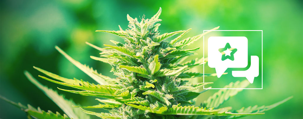 Strain Review: Chemdawg