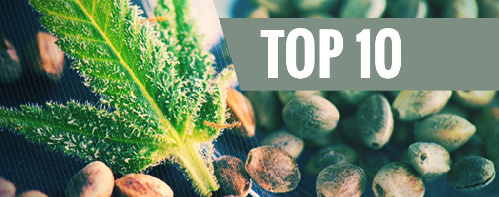 Le 10 banche del seme a parer nostro più popolari