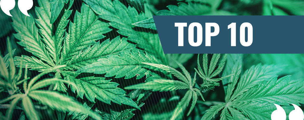 La nostra Top 10 delle migliori citazioni di tutti i tempi sulla marijuana