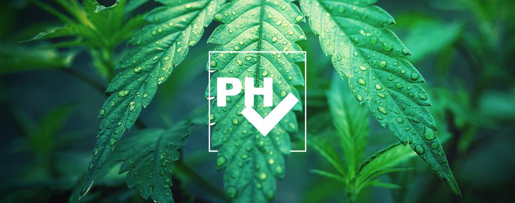 Adjust pH Level Cannabis