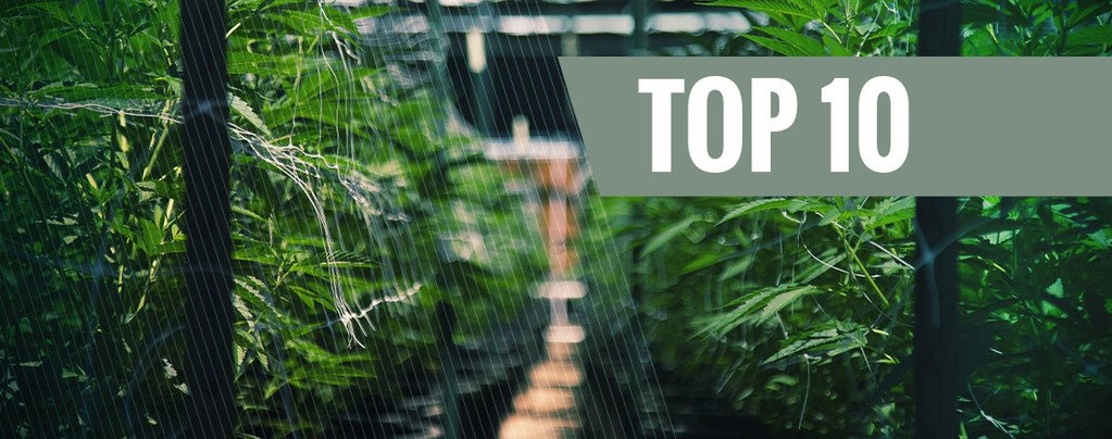 Our Top 10 Autoflowering Outdoor Strains
