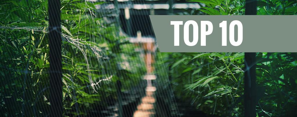 Unsere Top 10 der besten autoflowering Sorten für den Anbau im Freien