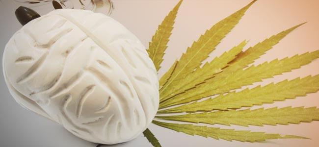 Effetti Cannabis Cervello