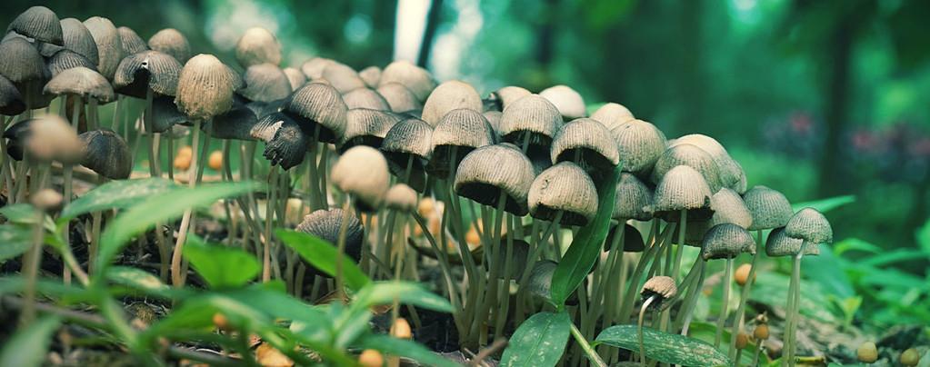 Magic Mushroom Hunting: A Field Guide