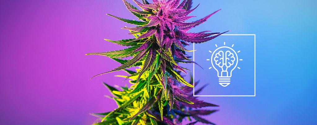 Perché la Cannabis Rende Più Creativi?