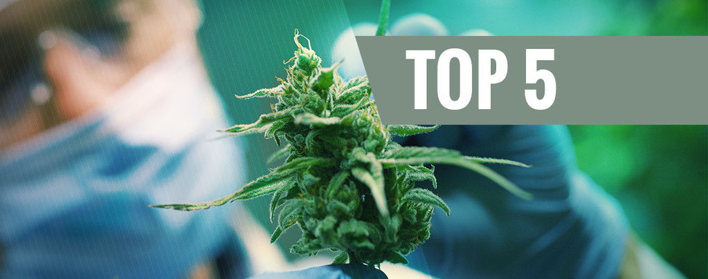 Top 5 CBD strains of 2016