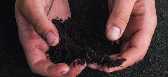 Humic and Fulvic Acids: What They Are, And How to Use Them
