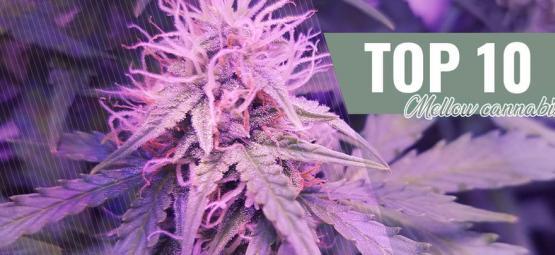 Top 10 Mellow Cannabis Strains