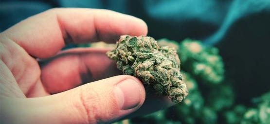 Popcorn Cannabis Buds: What They Are And How To Avoid Them