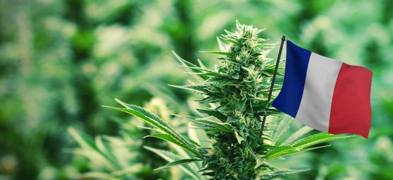 Best Outdoor Cannabis Strains To Grow In France
