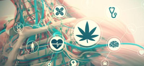 Effect Of Cannabis On Your Body