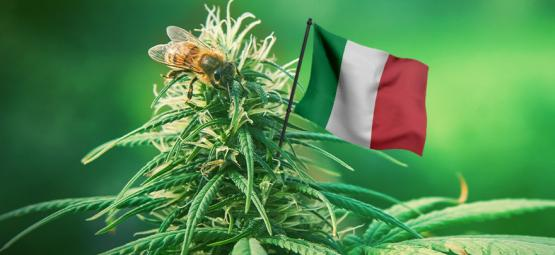 The Best Outdoor Cannabis Strains To Grow In Italy