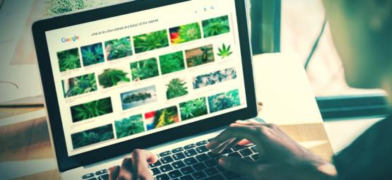 The Best Websites For Stoners [2021 Update]