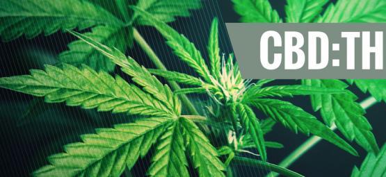 Understanding The Importance Of Different CBD:THC Ratios