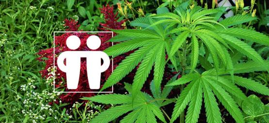 Companion Plants To Nurture & Protect Your Cannabis Crop