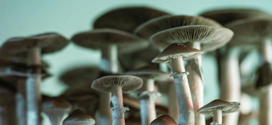 Using Magic Mushrooms For Studying: From Brain Cells To Microdosing