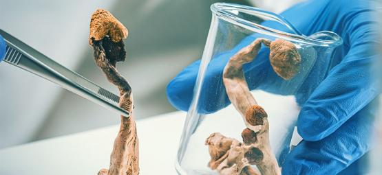Magic Mushroom Cultivation: How To Make a Silicone Injection Port