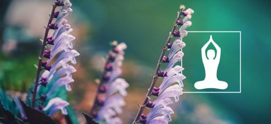 Why You Should Use Skullcap, The Herb That Induces Relaxation