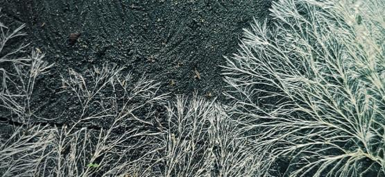 What Is Mycelium In Magic Mushroom Cultivation
