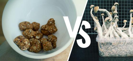 Magic Truffles VS Magic Mushrooms: Who Will Win?