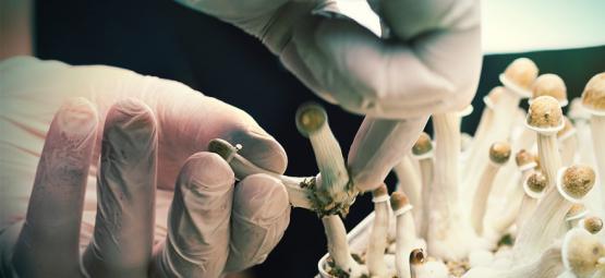 Top 5 Mushroom Grow Kits By Zamnesia