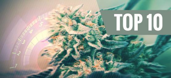 Top 10 Fastest Cannabis Strains For 2018