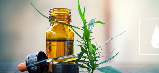 A Complete Guide To CO₂ Cannabis Oil