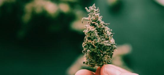 5 Super-Sticky Cannabis Strains