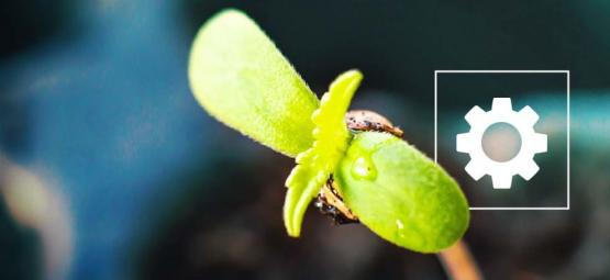 How To Grow Sticky Beast Automatic Weed
