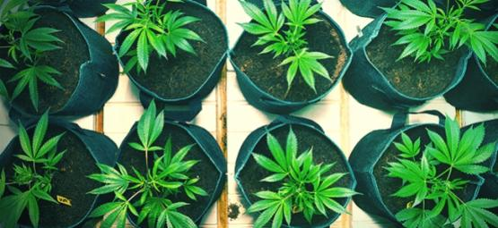 What Is A Smart Pot And How To Make Your Own