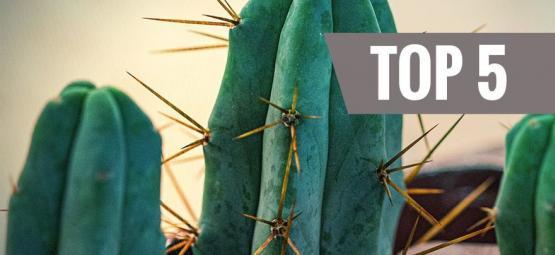 Top 5 Mescaline Cacti